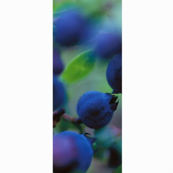 big-blueberries-panorama-card_shop