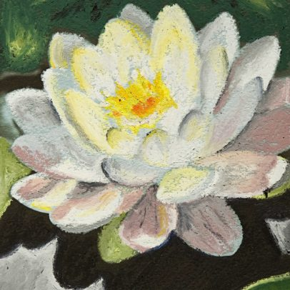 Water Lily_Pastel Card_SHOP