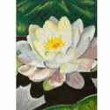 White Water Lily Pastel Painting_SHOP