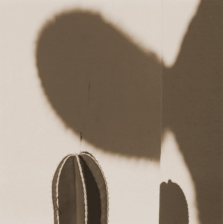 Saguaro Shadow 2