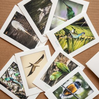 Costa Rica Greeting Cards