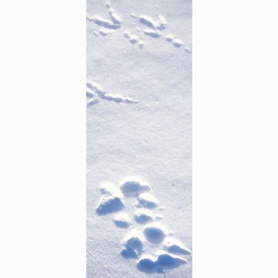 raven-and-wolf-tracks-panorama-card_shop