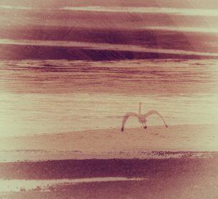 Ocean Shorebird